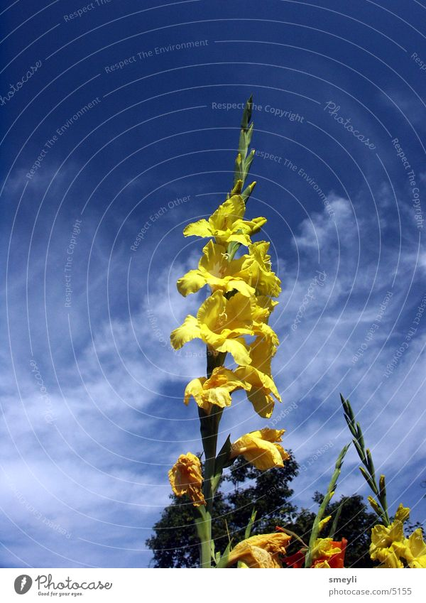 high up Flower Yellow Blossom Clouds Park Ecological Foxglove Bluebell Garden Nature Sky Detail Colour