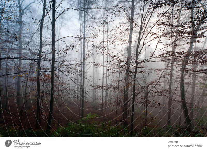 Nature Beautiful Landscape Forest Environment Life Autumn Style Moody Idyll Fog Lifestyle Climate Trip Transience Change