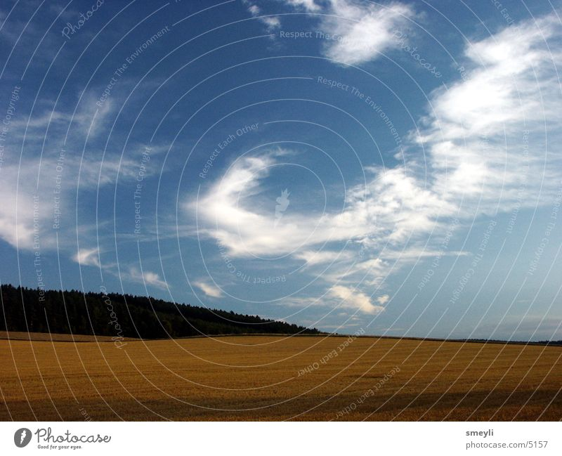 Nature Sky Sun Clouds Forest Meadow Grass Field Grain Harvest Stubble field