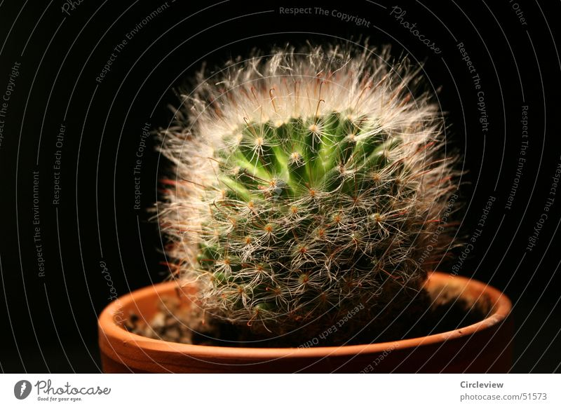 Green Plant Black Soft Point Pot Cactus Thorn Flowerpot Houseplant