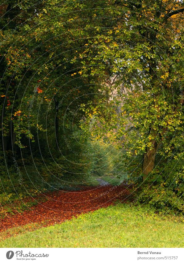 Nature Beautiful Green Plant Tree Red Landscape Calm Leaf Forest Yellow Meadow Autumn Grass Lanes & trails Natural