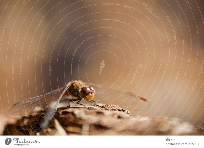 Nature Animal Environment Small Natural Sit Wild animal Wing Insect Crouch Dragonfly Compound eye Dragonfly wings