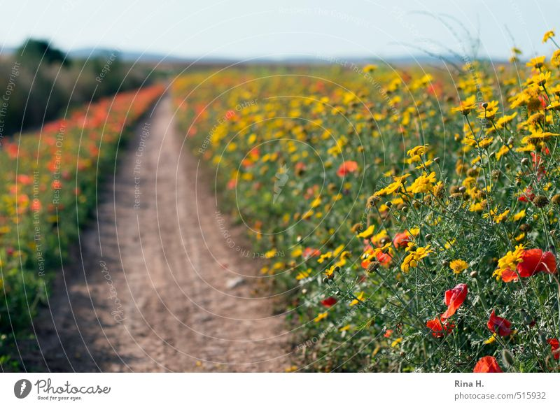 Wildflowers Environment Nature Landscape Plant Horizon Spring Summer Beautiful weather Flower Blossom Wild plant Meadow Field Lanes & trails Blossoming Natural