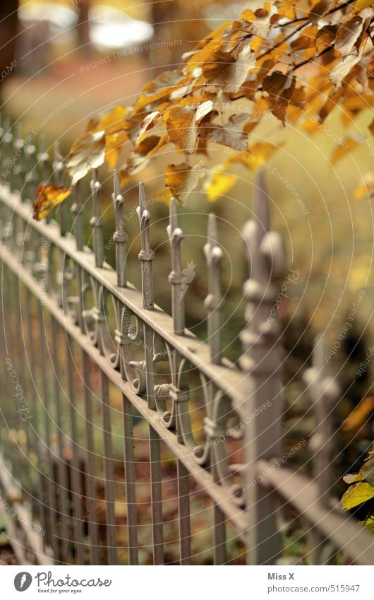 autumn Garden Autumn Beautiful weather Leaf Multicoloured Fence Wrought iron Branch Twig Autumnal Autumn leaves Autumnal colours Early fall Point Colour photo