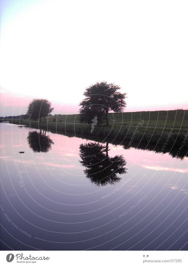 mirroring Violet Reflection Tree Calm Water Sky Clarity Evening