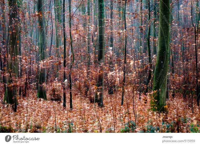 Another autumn like that Lifestyle Style Design Trip Environment Nature Landscape Autumn Bushes Deciduous forest Forest Exceptional Uniqueness Speed Beautiful