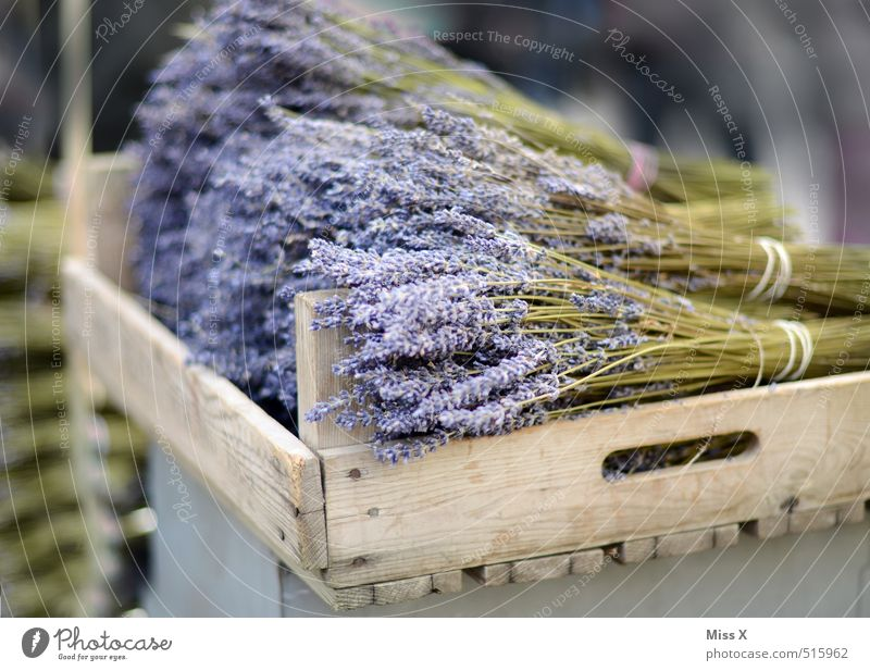 lavender Herbs and spices Nutrition Italian Food Flower Leaf Blossom Blossoming Fragrance To dry up Violet Lavender Farmer's market Vegetable market Sell