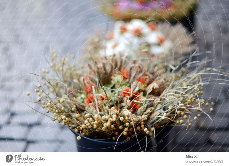 Onion market Weimar Shopping Autumn Flower Blossom Marketplace Blossoming Faded To dry up Dry Weimar Onion Market Dried flower Bouquet Bucket Flowerpot Florist