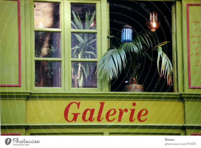 Green Window Moody Paris France Gallery Houseplant