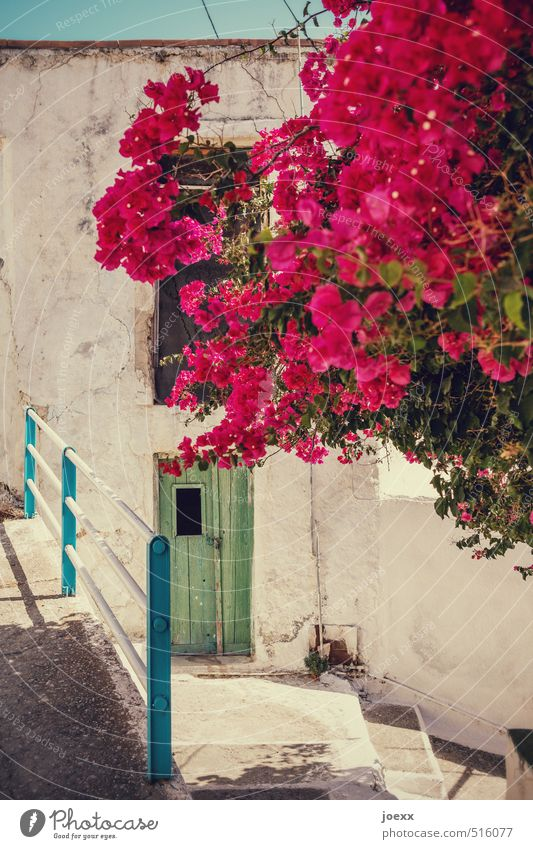 bouquet Sky Sun Summer Beautiful weather Plant Blossom bugan villa Crete Greece Village Deserted Wall (barrier) Wall (building) Stairs Door Blossoming Old