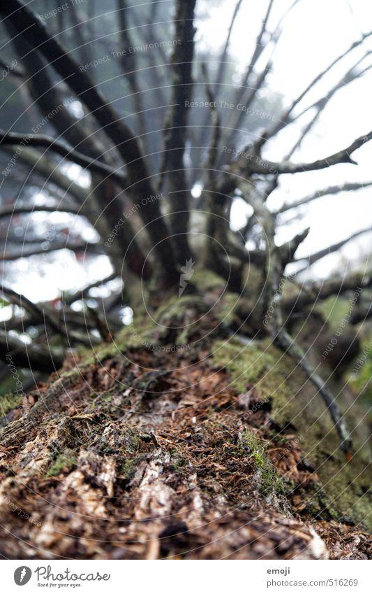 Nature Plant Tree Environment Natural Brown Tree bark
