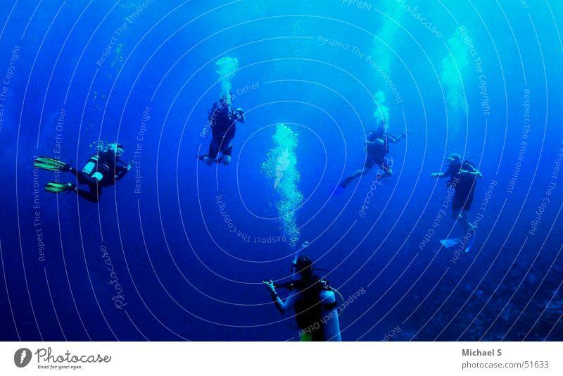 Vacation & Travel Freedom Dive Maldives Aquatics Diver Weightlessness Underwater photo