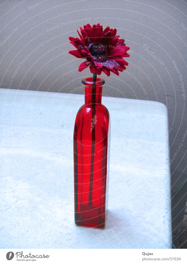 Red Summer Flower Emotions Happy Warmth Spring Success Table Hope Romance Physics Positive Lust Vase Flower vase