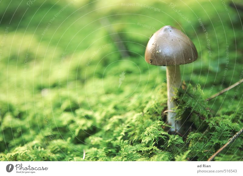 space oddity Food Mushroom Mushroom cap Nutrition Vegetarian diet Nature Animal Autumn Plant Grass Bushes Moss Foliage plant Agricultural crop Park Field Forest