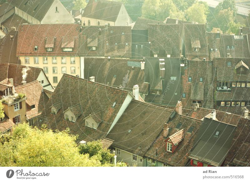 City Old Tree House (Residential Structure) Wall (building) Life Architecture Autumn Building Wall (barrier) Places Church Warm-heartedness Beautiful weather
