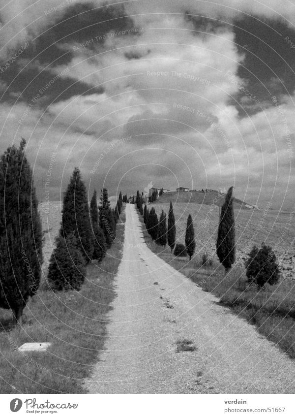 a long way Tuscany Field Cypress Clouds Black White Dusty Exterior shot Lanes & trails Street Mountain Target Far-off places