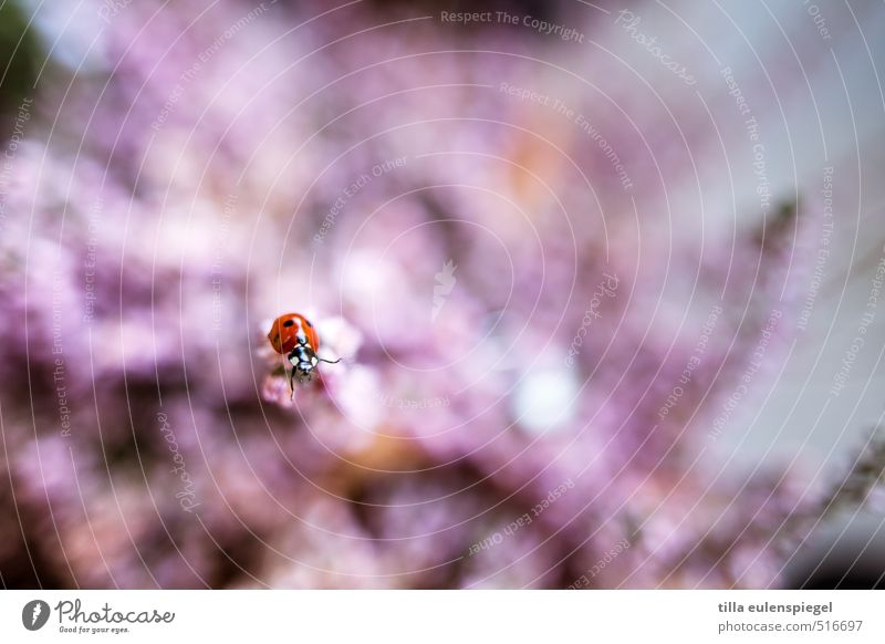 dots Animal Beetle Ladybird 1 Crawl Pink Red Nature Colour photo Blur Insect Plant Close-up Macro (Extreme close-up) Shallow depth of field