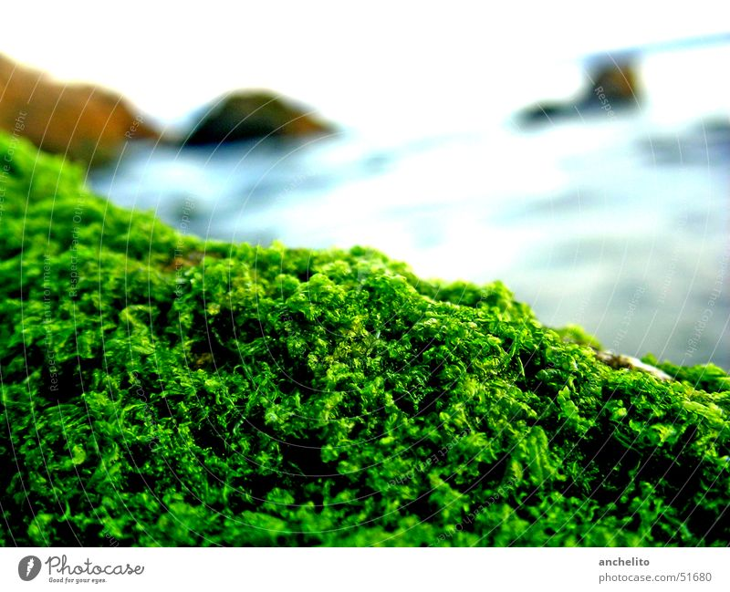 simply moss on a stone by the sea Soft Plant Overgrown Ocean Lake Green Calm Beach Pattern Kale Broccoli Nature Macro (Extreme close-up) Coast Moss Blue Stone