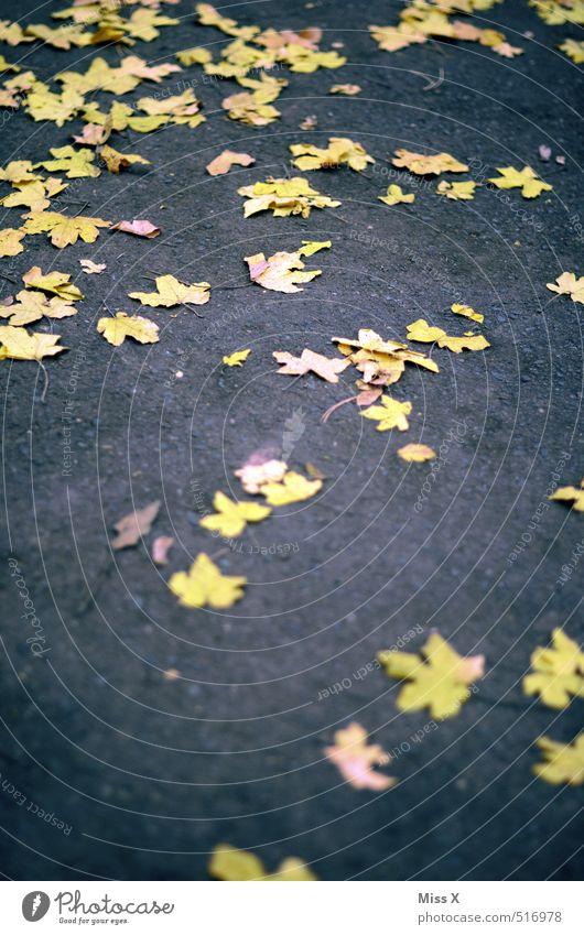 Leaf Yellow Street Autumn Lanes & trails Lie Asphalt Sidewalk Autumn leaves Maple leaf Autumnal colours Slippery surface