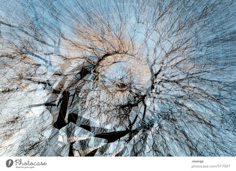 B-B tree Art Environment Nature Sky Autumn Climate change Tree Branch Tree trunk Growth Exceptional Gigantic Beautiful Many Crazy Chaos Network Perspective