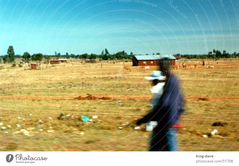 On the way to the safari Africa Black White Brown Green Tree Symbols and metaphors Trash Safari House (Residential Structure) Speed Kenya Man Driving