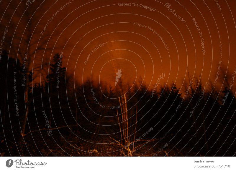 Tree Dark Wind Creepy Passion Ghosts & Spectres  Glow