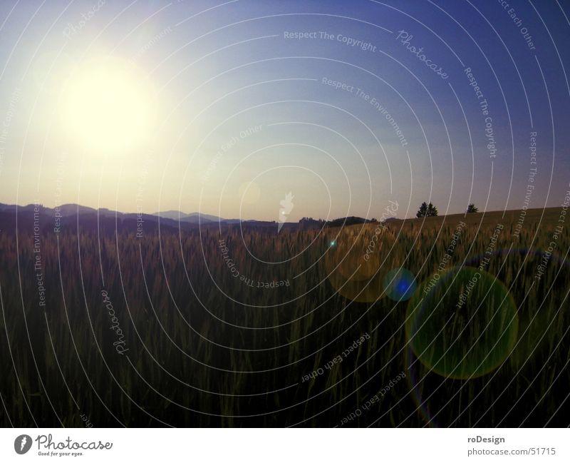 Sky Sun Landscape Grain