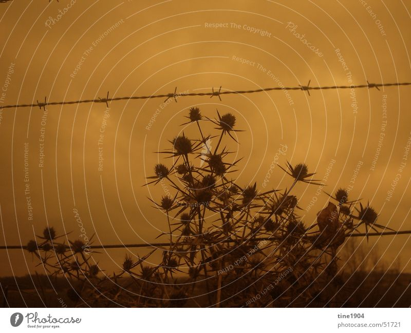 Nature Sky Plant Clouds Far-off places Dark Cold Sadness Border Fence Thorn Bad weather Barbed wire Thistle Barbed wire fence