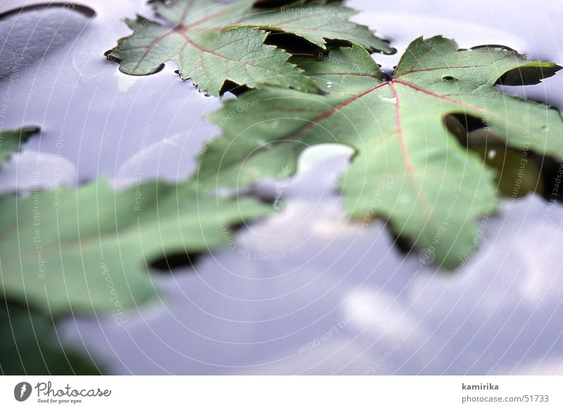 cold and damp Autumn Leaf Maple tree Maple leaf Puddle Water Drops of water Stone