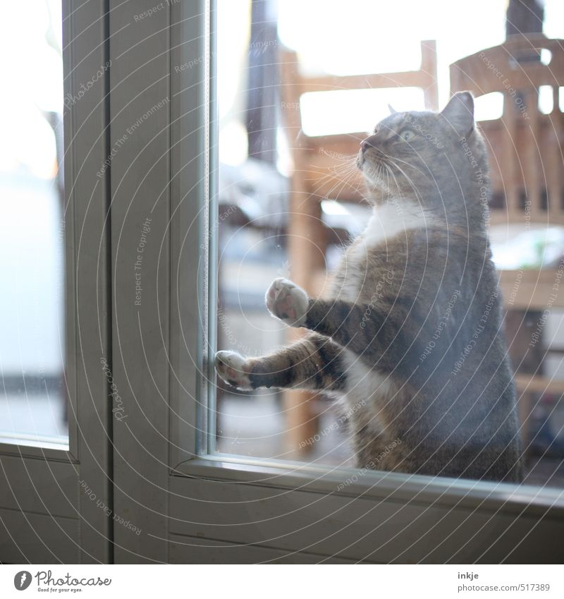 Cat Animal Window Emotions Moody Together Flat (apartment) Room Living or residing Wait Warm-heartedness Hope Curiosity Desire Animal face Pet