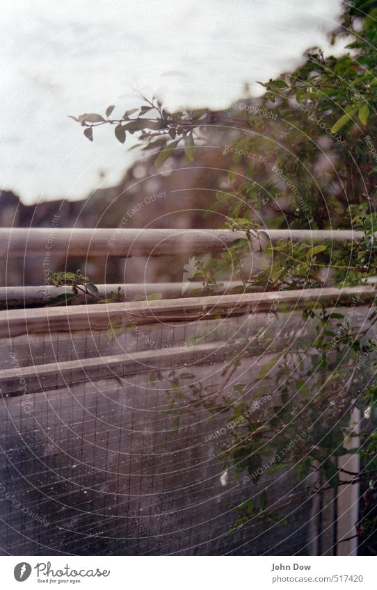 Sky Plant Leaf Dream Growth Bushes Vantage point Transience Retro Branch Handrail Past Balcony Fatigue Analog Double exposure