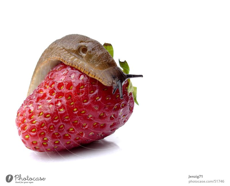 She likes you too. Snail Red Delicious Slug Strawberry Fruit