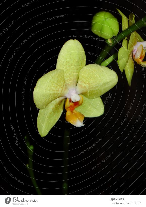 Orchid at night Flower Yellow Night Dark Contrast