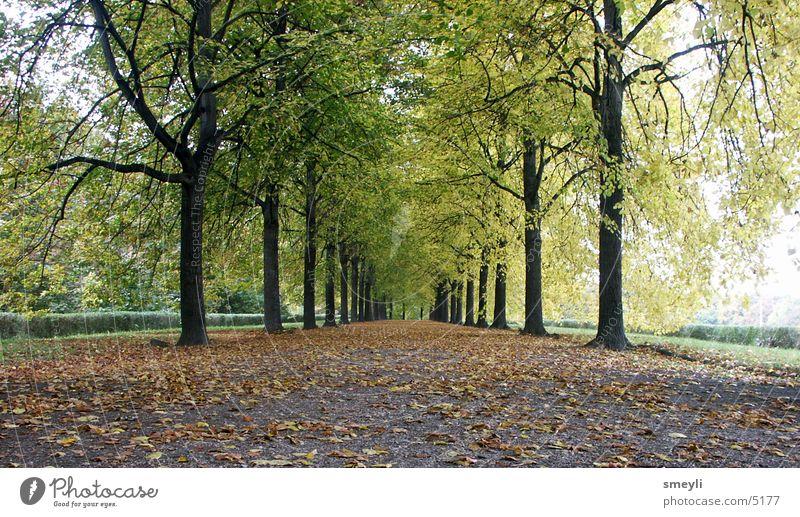 Tree Green Leaf Street Autumn Garden Lanes & trails Park Landscape Horizon Future Avenue Symmetry Beech tree Lime tree