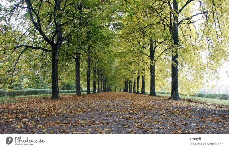 Tree Green Leaf Street Autumn Garden Lanes & trails Park Landscape Horizon Future Avenue Symmetry Beech tree Lime tree