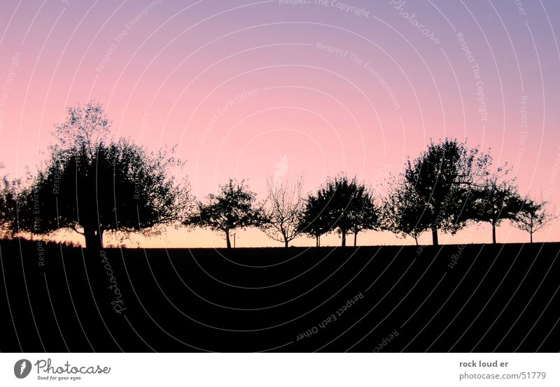 Landscape Counterfiles [Trees] Black Dark Red Yellow Sunset Dusk Blue Contrast Detail Nature