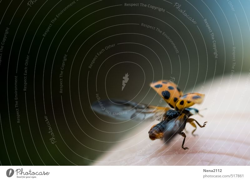 Time change last flight Nature Animal Beetle 1 Flying Vacation & Travel Sports Ladybird Wing Airplane takeoff Departure Freedom Going Colour photo Exterior shot