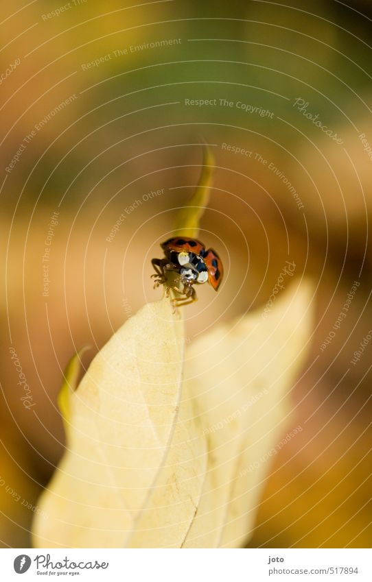 Nature Red Leaf Animal Autumn Lanes & trails Freedom Garden Park Idyll Contentment Warm-heartedness Threat Cute Insect Fear of flying