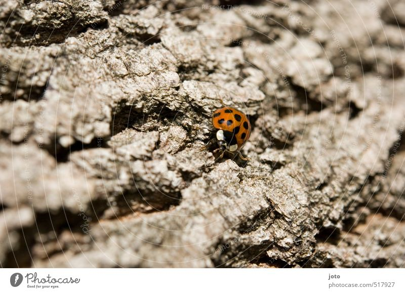 trekking Trip Adventure Freedom Nature Animal Autumn Tree Tree bark Beetle Insect Ladybird Crawl Hiking Small Cute Round Willpower Movement Experience Target