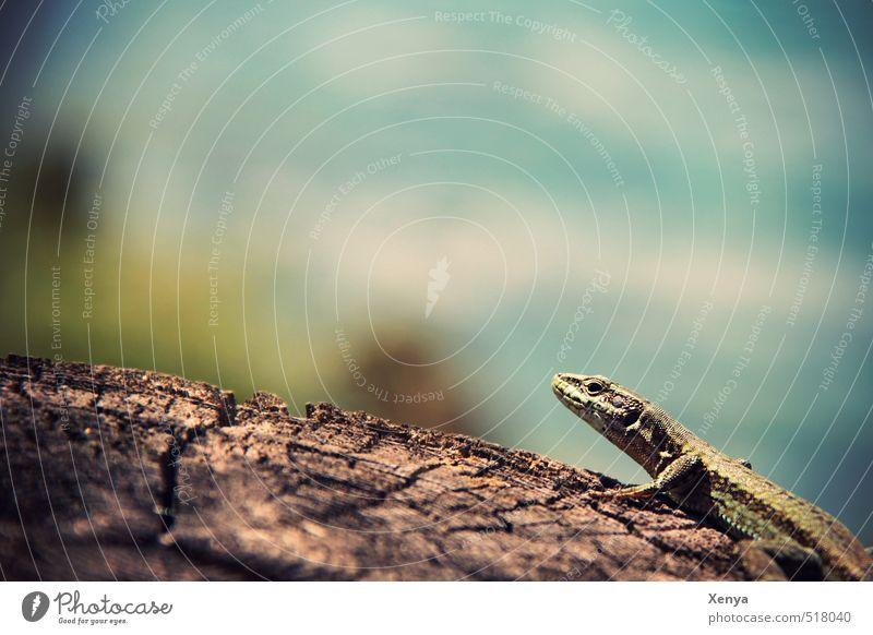 Nature Blue Green Summer Sun Animal Environment Wood Esthetic Sunbathing Exotic Lizards