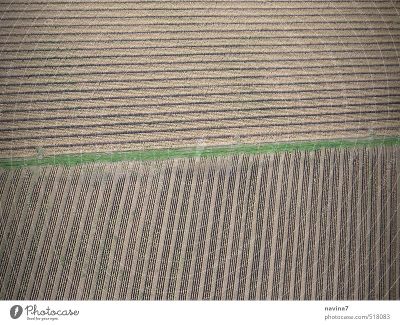 Green Landscape Environment Autumn Sand Brown Field Earth Growth Harvest Agriculture Drought Disciplined Orderliness Arable land