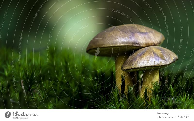 Nature Plant Calm Forest Autumn Power Earth Change Protection Attachment Moss Mushroom Boletus