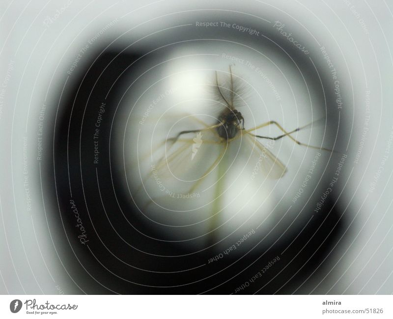 Animal Death Fly Wing Insect Transparent Magnifying glass Mosquitos Diminutive Enlarged Ephemera Tiny hair Microscopic Weaver's glass