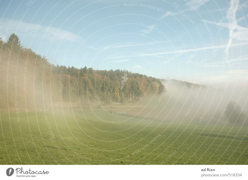 Time change. My your day. Environment Nature Landscape Animal Sky Cloudless sky Sun Autumn Climate Beautiful weather Fog Tree Grass Bushes Meadow Field Forest