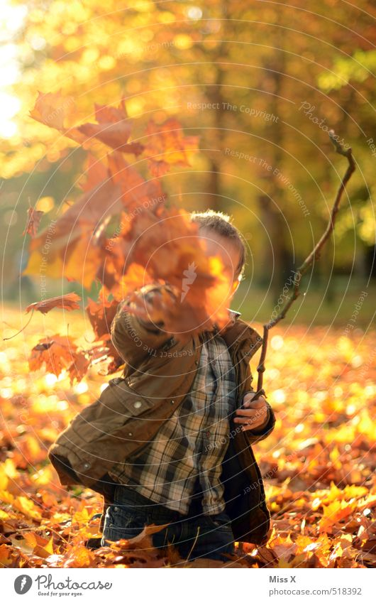 To the photographer Leisure and hobbies Playing Children's game Human being Infancy 1 3 - 8 years Nature Autumn Leaf Garden Park Forest Throw Brash Happiness