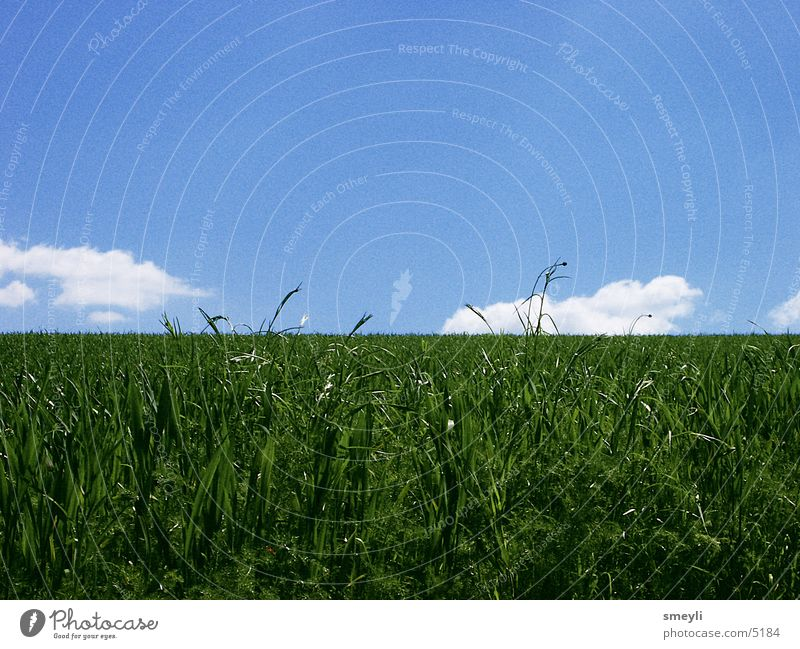 Behind the horizon it goes on Meadow Grass Clouds Loneliness Calm Contentment Horizon Green Park Sky Nature Blue