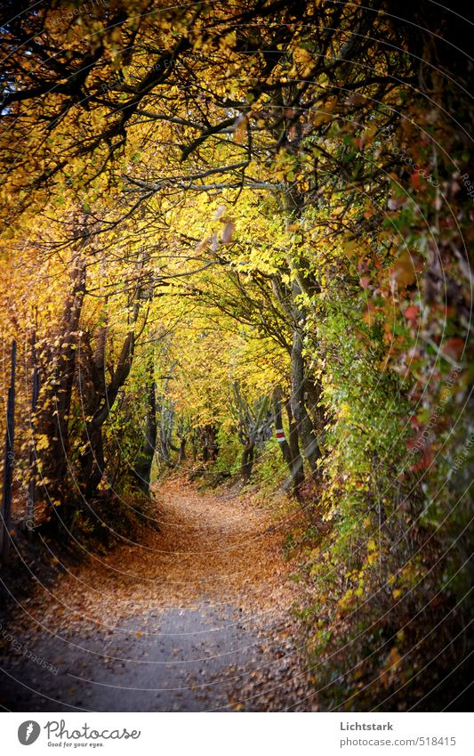 you go ahead Environment Nature Landscape Autumn Plant Tree Bushes Leaf Park Breathe Observe Think Relaxation Fitness Draw Running Blue Brown Yellow Gold Green