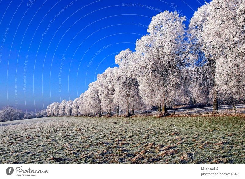 Winter Cold Landscape Ice Bizarre