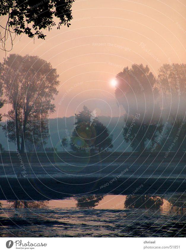 morning mist Reflection Morning Lake Fog Grief Tree Dawn Sadness