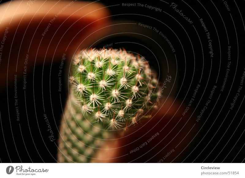 Look at that! Cactus Black Pot Plant Houseplant Green Fingers Thorn Point prick pricks pointed house plans Lens Magnifying glass lense